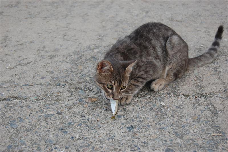 【トラブゾン】猫