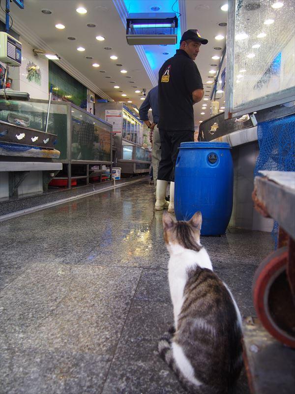 【イスタンブール】魚を狙う猫