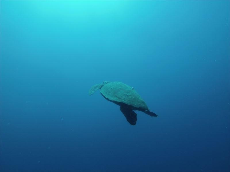 【トーフ】ダイビング