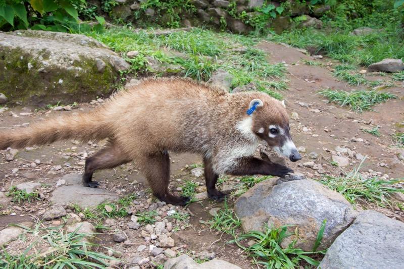 【テポストラン】エル・テポステコ国立公園のビューポイント