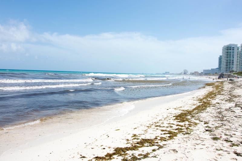 カンクン|海藻まみれのビーチ