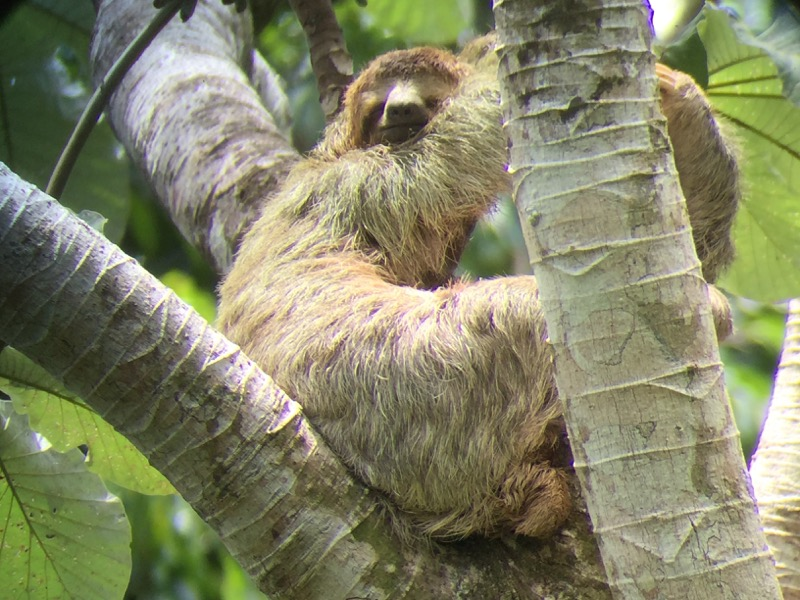コスタリカ|マヌエル・アントニオ国立公園