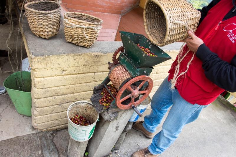 サレント|コーヒー農園「EL OCASO」